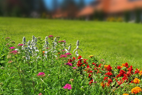 Flowers on a hillside in front of a blurred home.