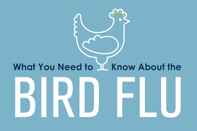 What you need to know about the bird flu