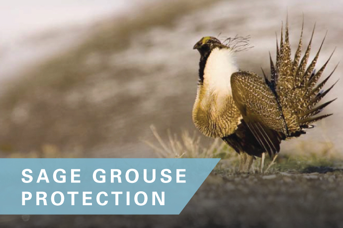 Sage Grouse Protection Order