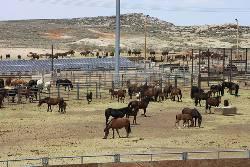 Managing Wild Horses
