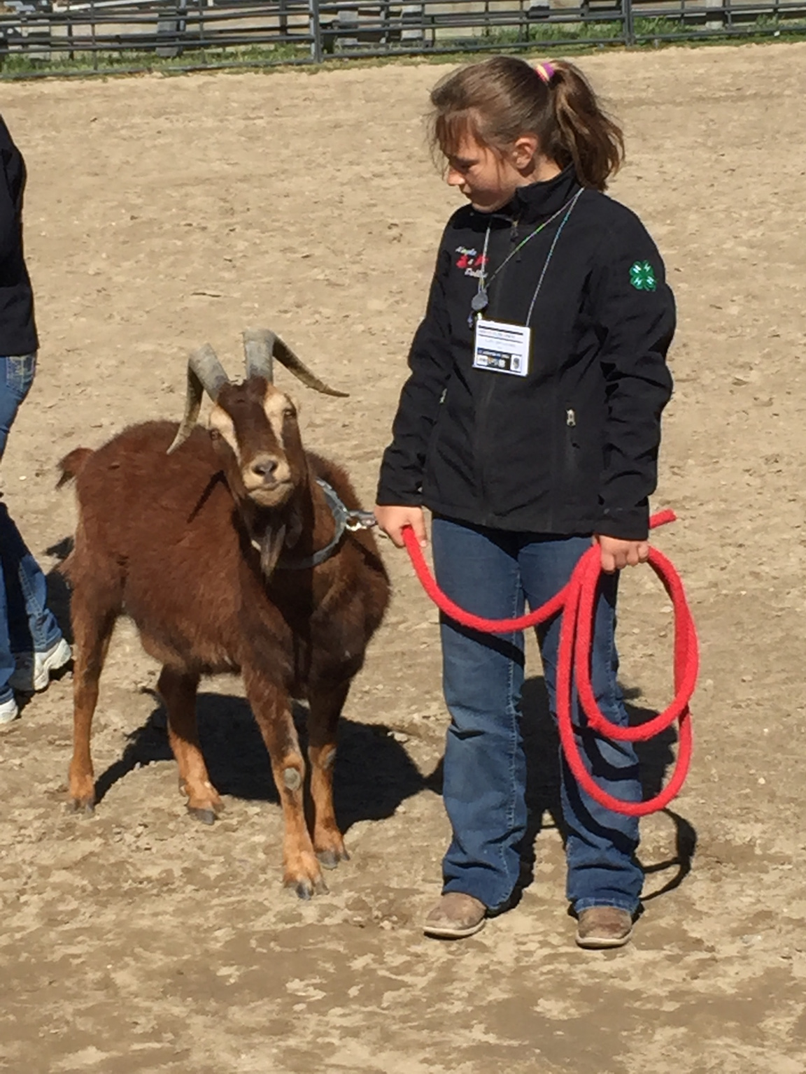 girl showing a goat