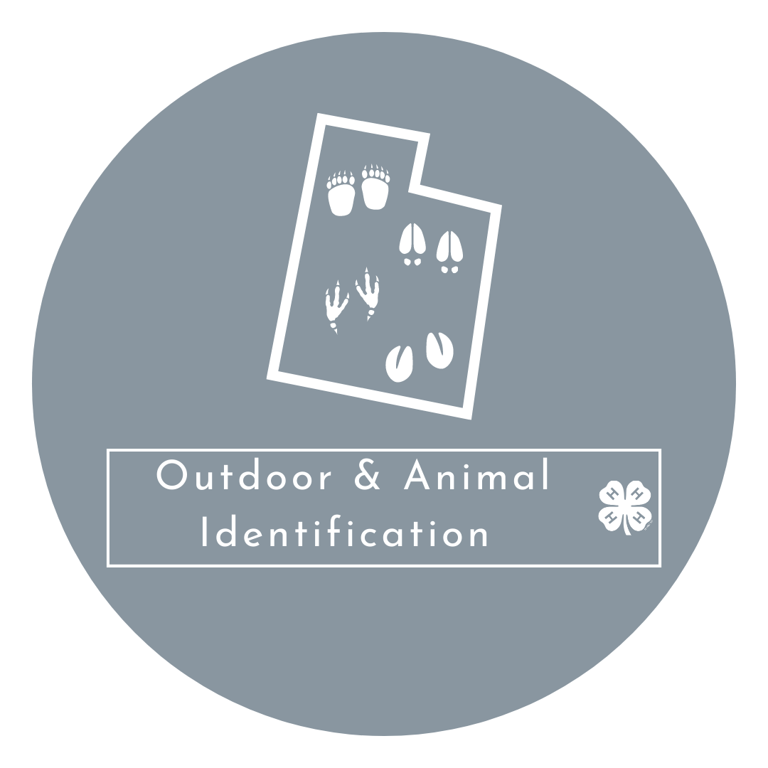 Outdoor and Animal Identification Test