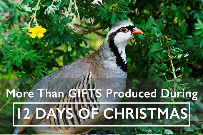 12 Days of Christmas Fertilizer