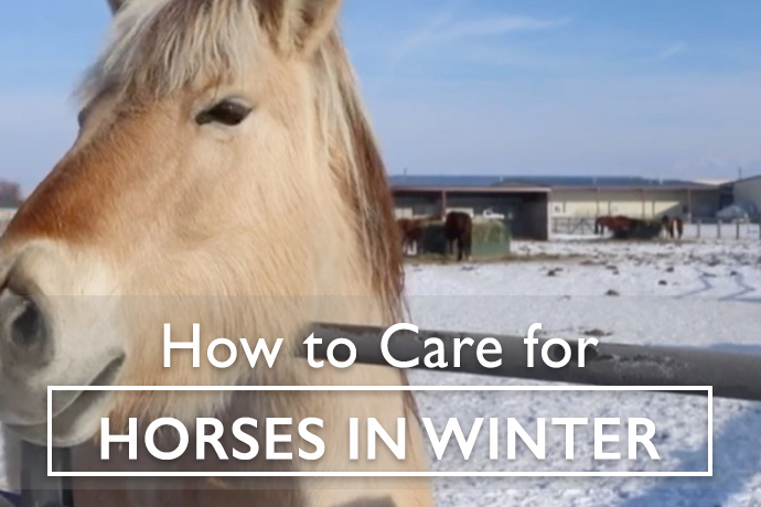 How to Care for Horses in Winter