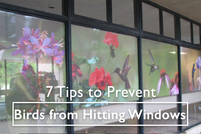 Tips to Keep Birds from Hitting Windows