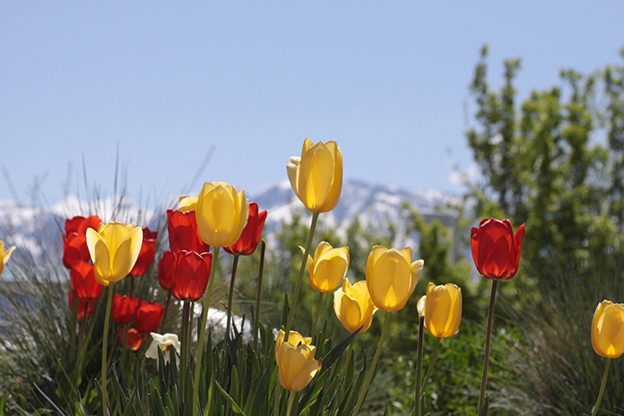 Ask an expert plant bulbs now for spring color explosion mightylinksfo Choice Image
