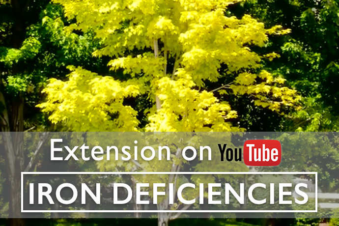 How to Detect and Control Iron Deficiencies