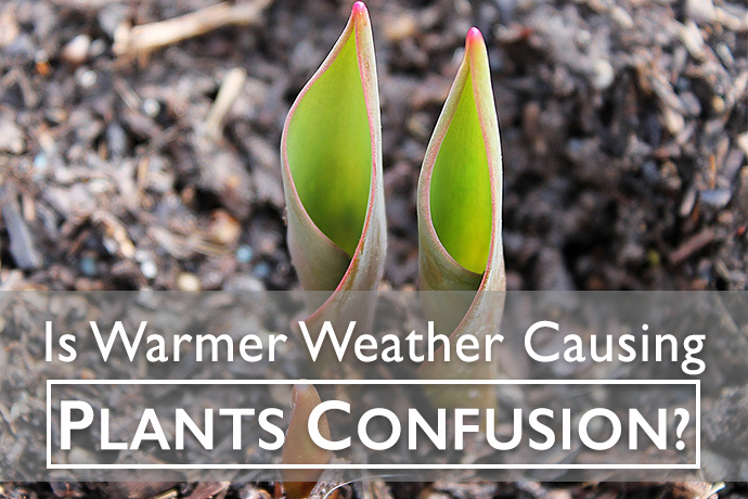 Is Warm Weather Confusing Plants and Trees?