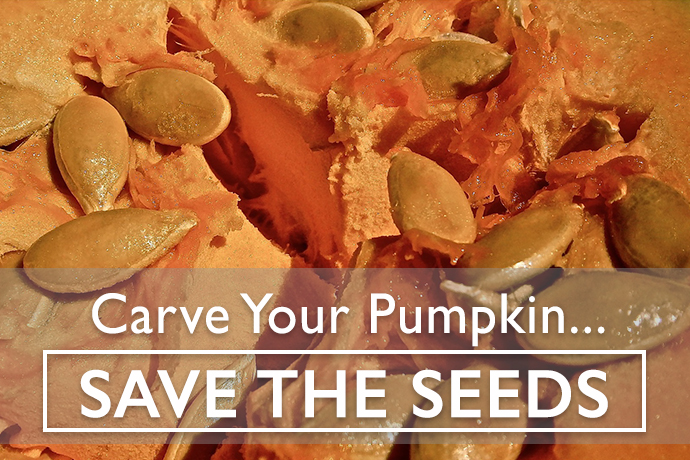 5 Tips for Pumpkin Seeds