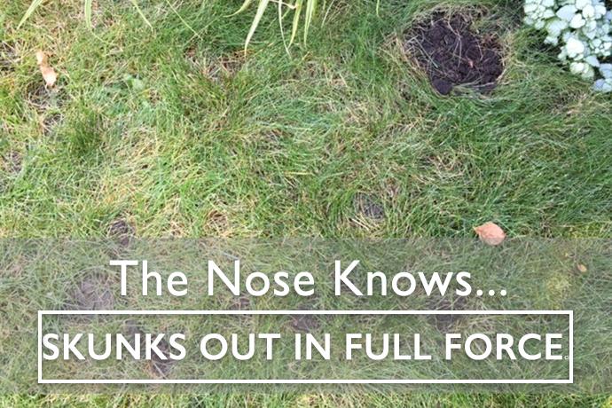 Skunk Pod