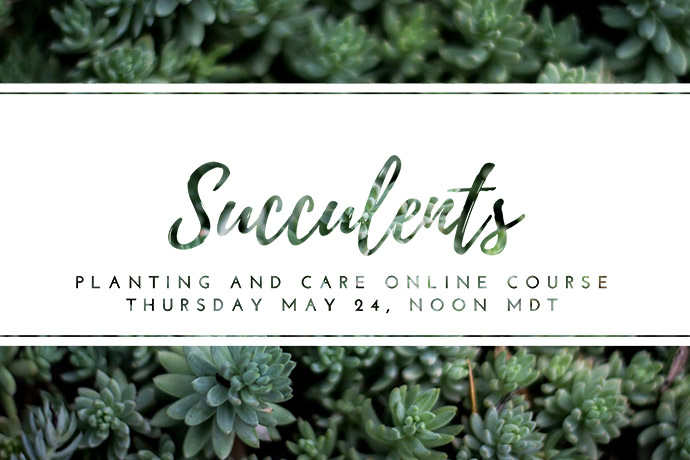 Succulents Course