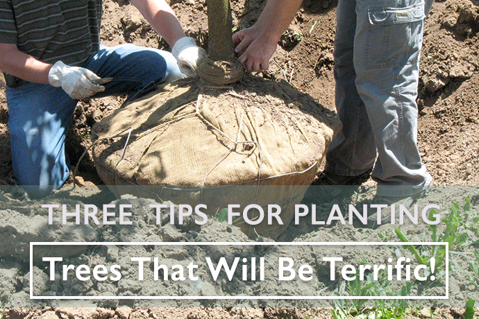 Three Tips for Planting Trees