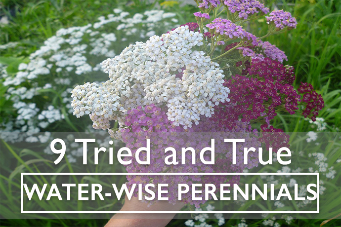 9 Tried and Ture Water-Wise Perennials