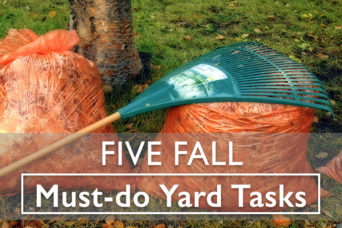 Fall Yard Tasks