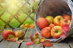 Ask an Expert - Checklist for September Yard and Garden Tasks