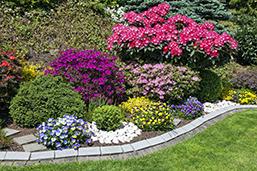Ask an Expert - August Yard and Garden Checklist