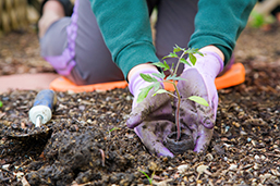 Gardener's Almanac Checklist for June