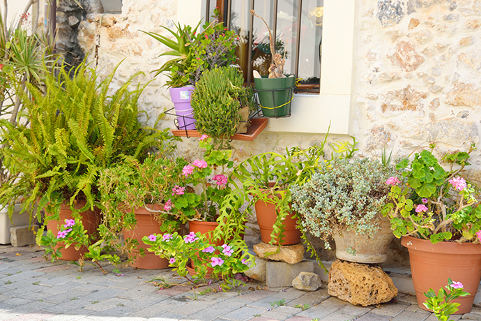 Ask A Specialist Seven Tips For Container Gardens That Thrill Fill And Spill Usu