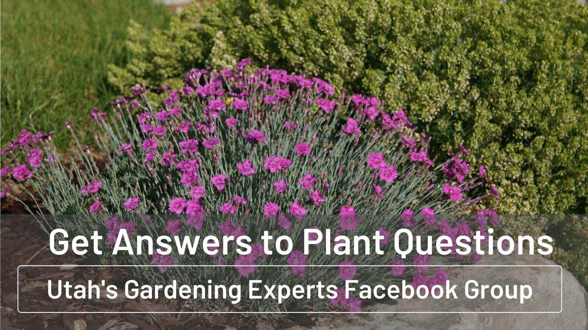 Utah Gardening Facebook Group