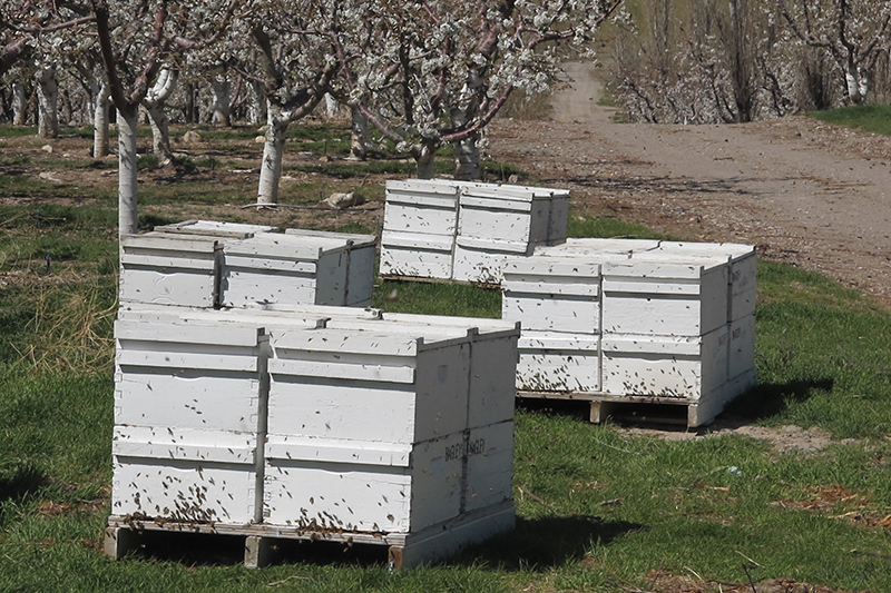 artificial beehives in an orchard