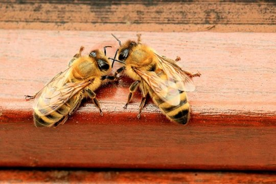 Insecticides damage bee socialization and learning skills, study reports