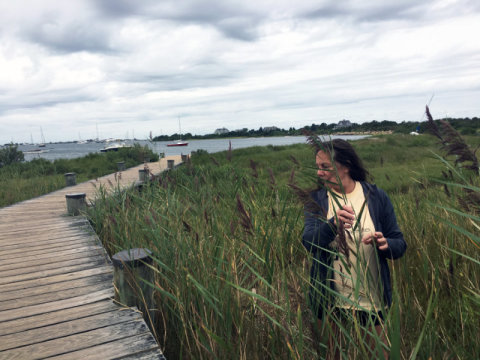Laura Meyerson has a garden of phragmites