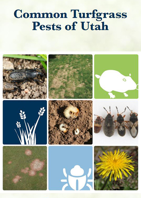 Common Turfgrass Pests Guide Cover Image