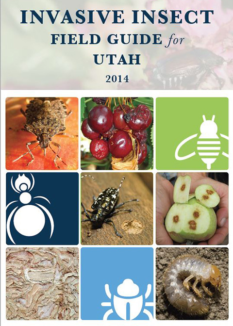 Insect Field Guide Cover Image