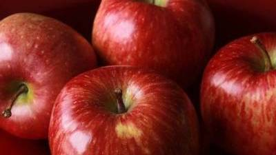 Rows of apple varieties