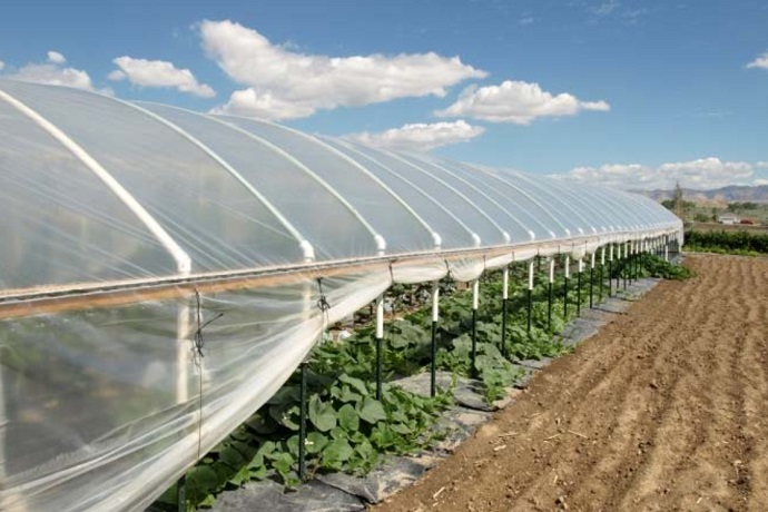 green house tunnel with strong wind design