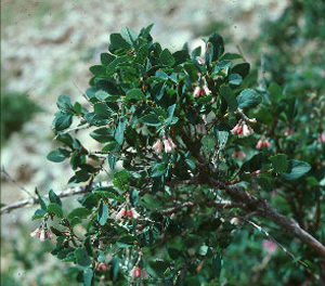 name of plant