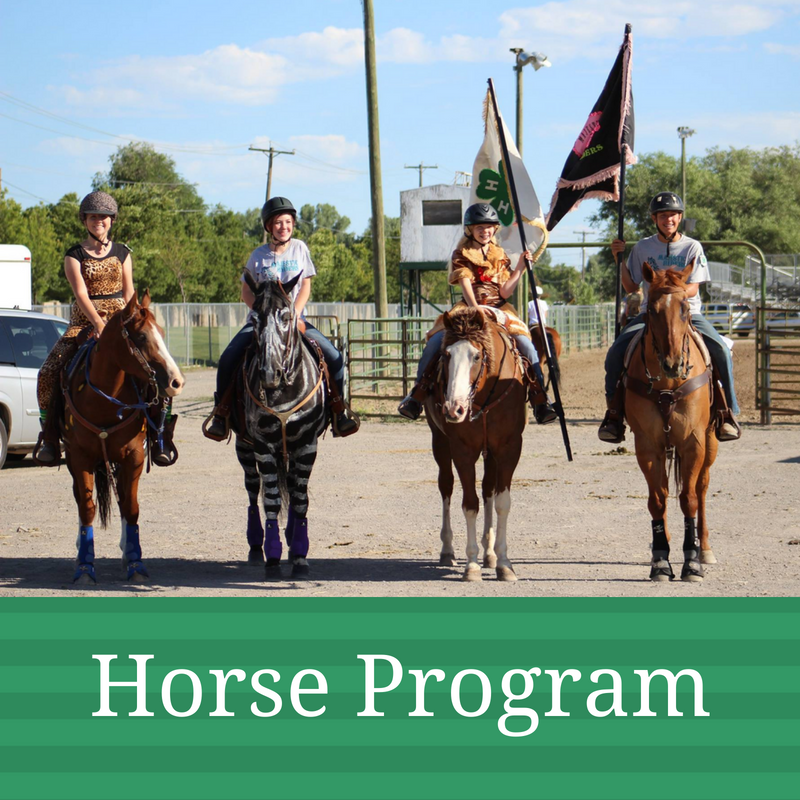 Horse Program Graphic