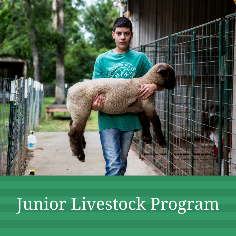 Junior Livestock Program Graphic