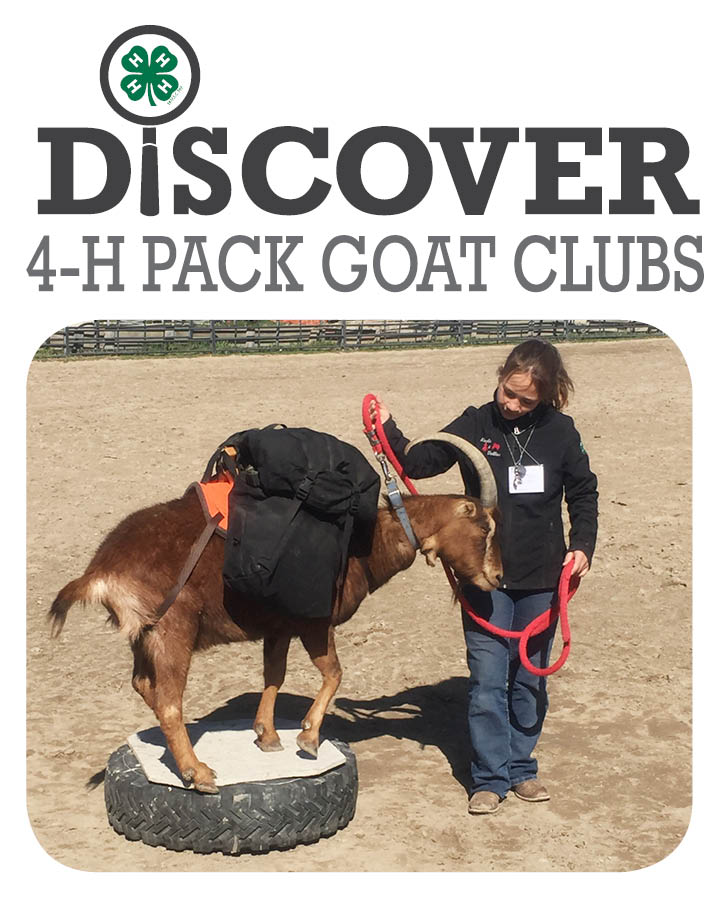 Pack Goats