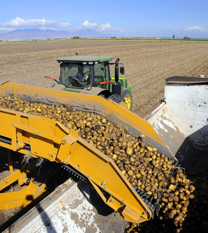 Commercial Seed Potato Production in Cache County, Utah