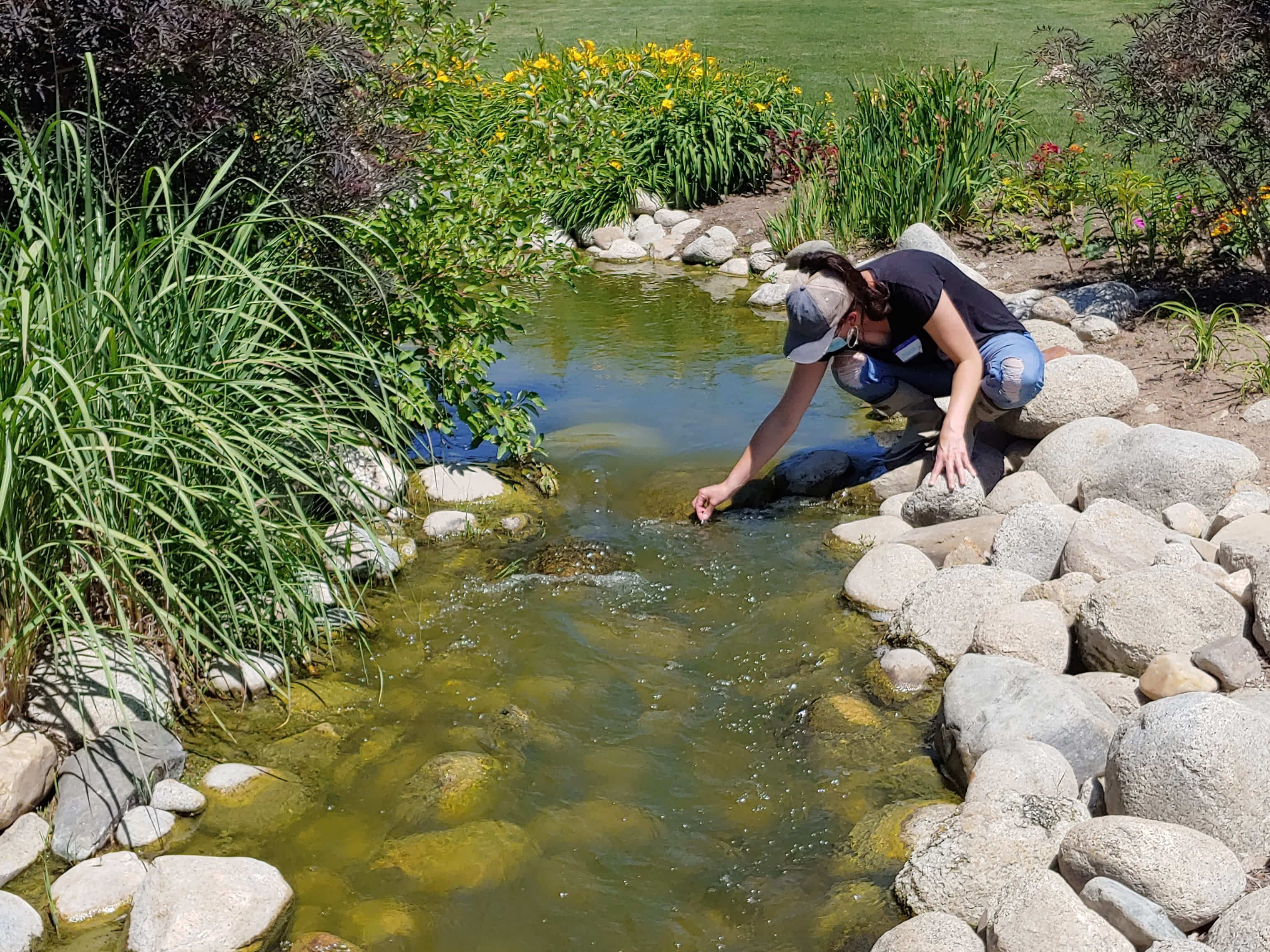 Volunteer taking a sample in a stream