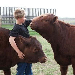 4-H boy with cows
