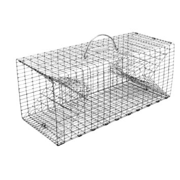 raccoon live-trap