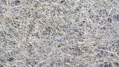 Is Your Lawn Dead or Dormant?