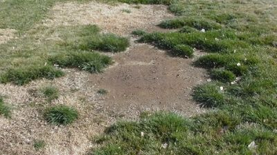 Growing Turf on Salt-Affected Sites